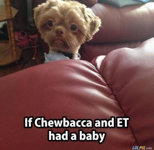chewbacca and et