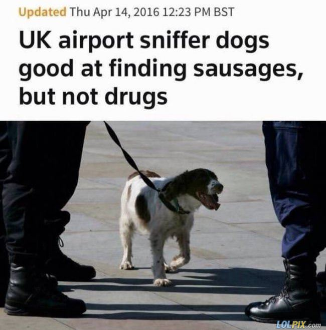 good at finding sausages