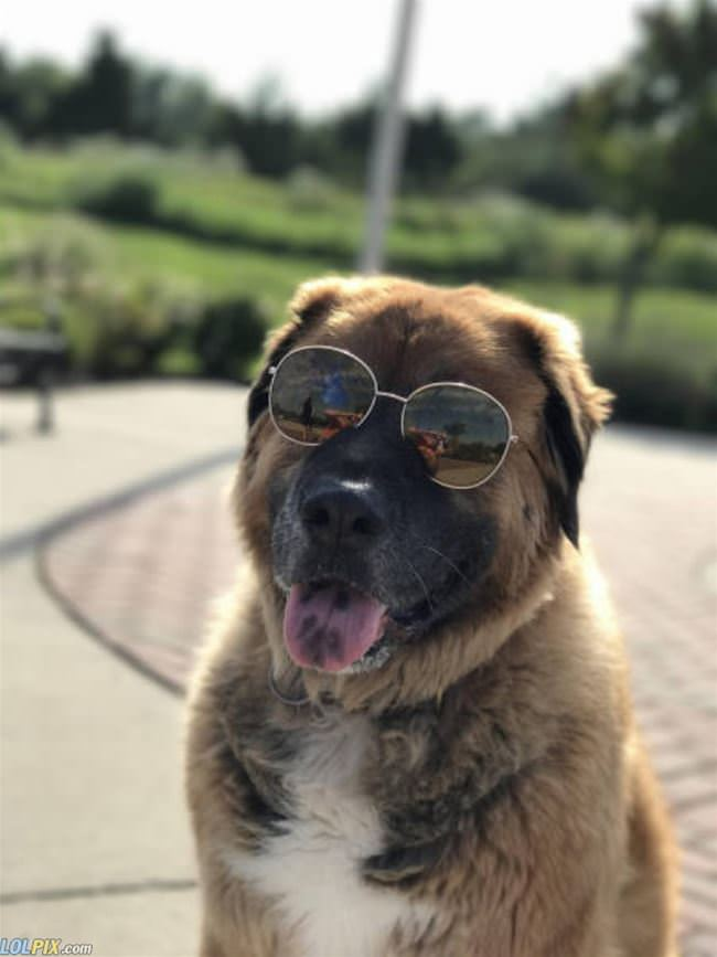 that is one cool dog