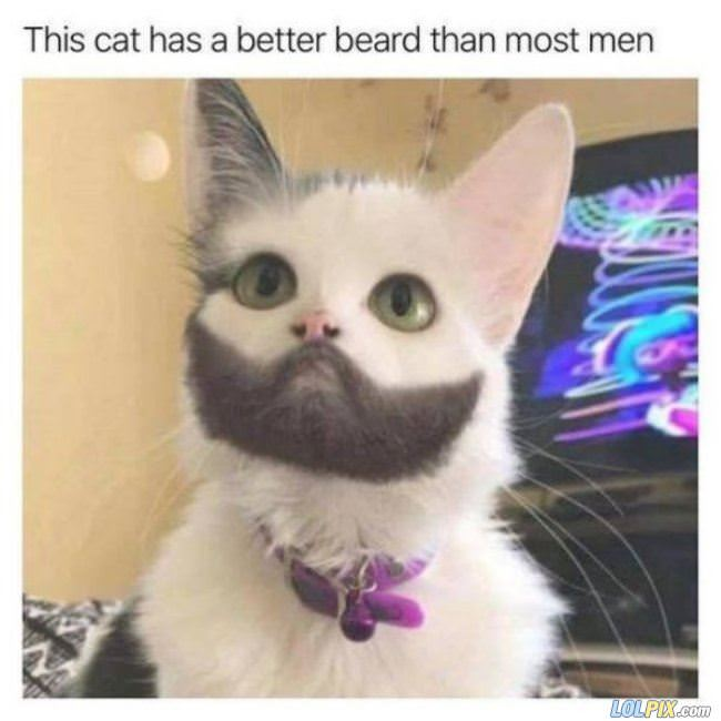 an amazing beard