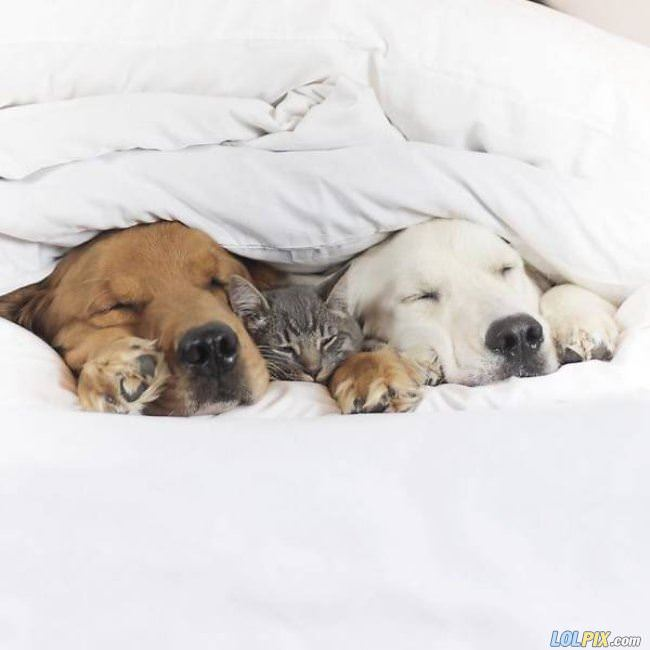 tucked in with my buddies