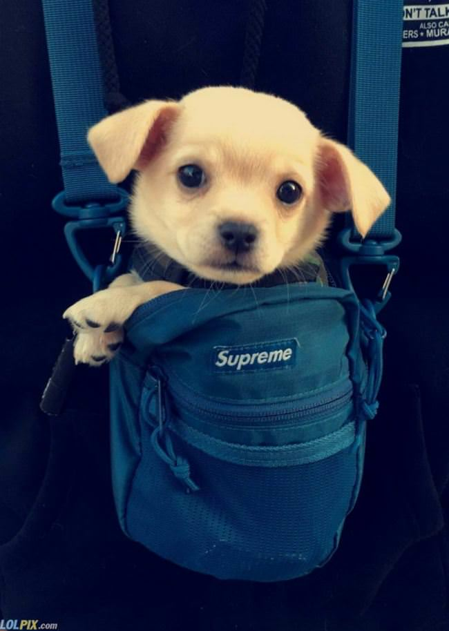 a bag of puppo