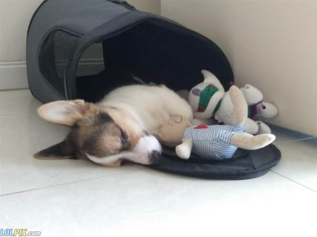 asleep with my toy