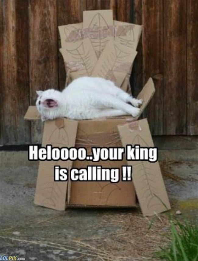 king is calling