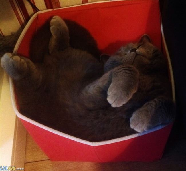 laying in my box