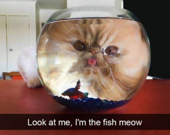 i am a fishy meow