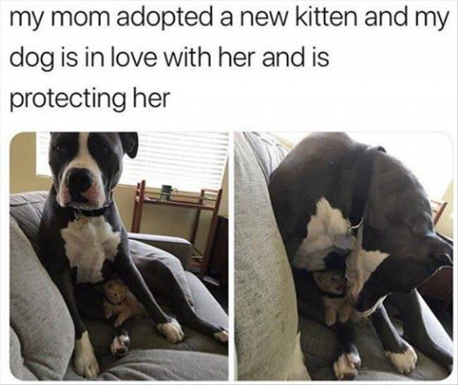protecting the kitten