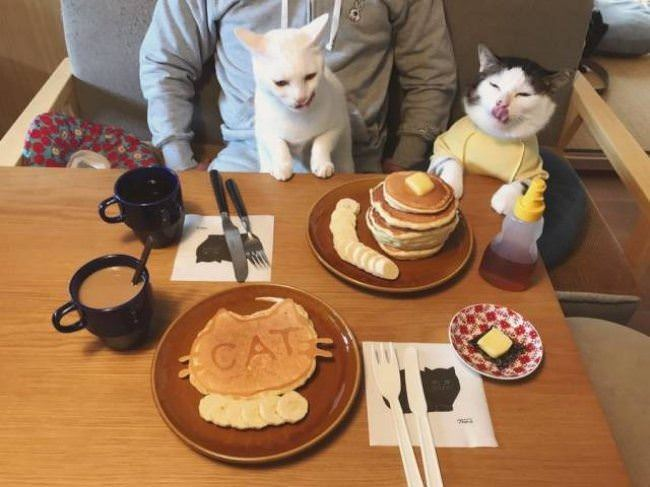 the cat breakfast