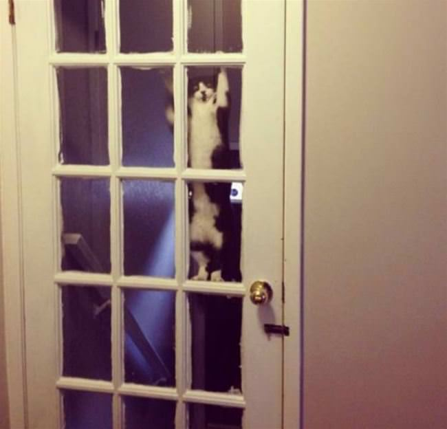 hey guys can you let me in