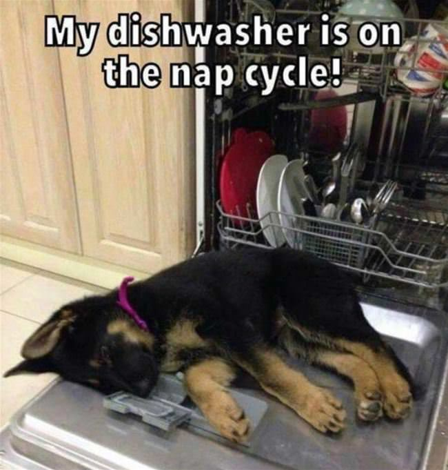 my dishwasher cycle