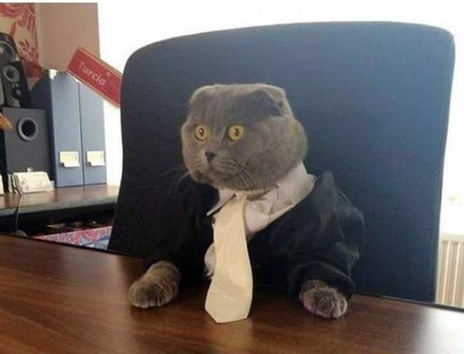 i am business