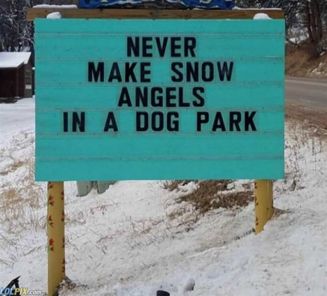 never make snow angels in a dog park