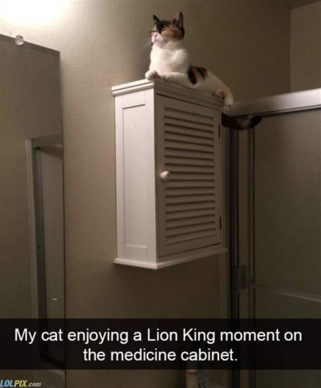 the lion king cat