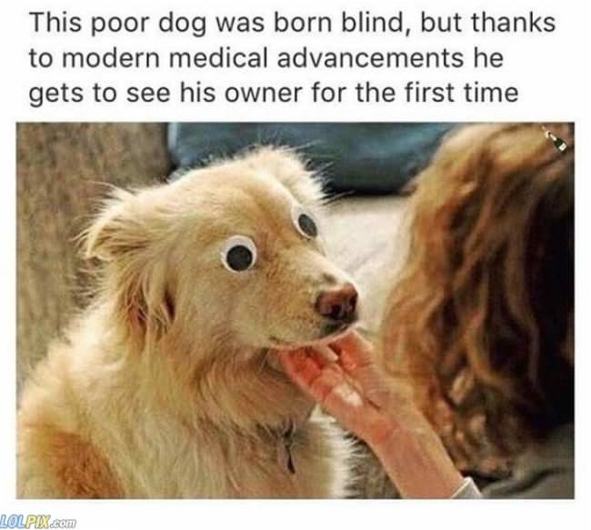 this dog was born blind