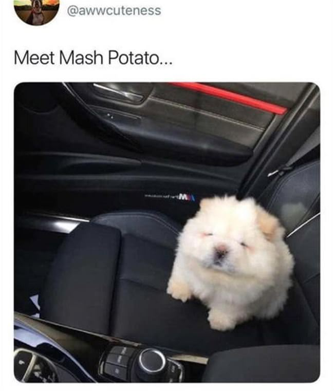 meet mashed potato
