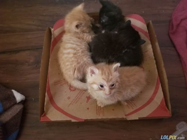 box of the cats