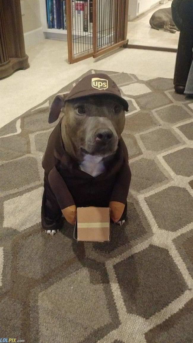i am the mail dog