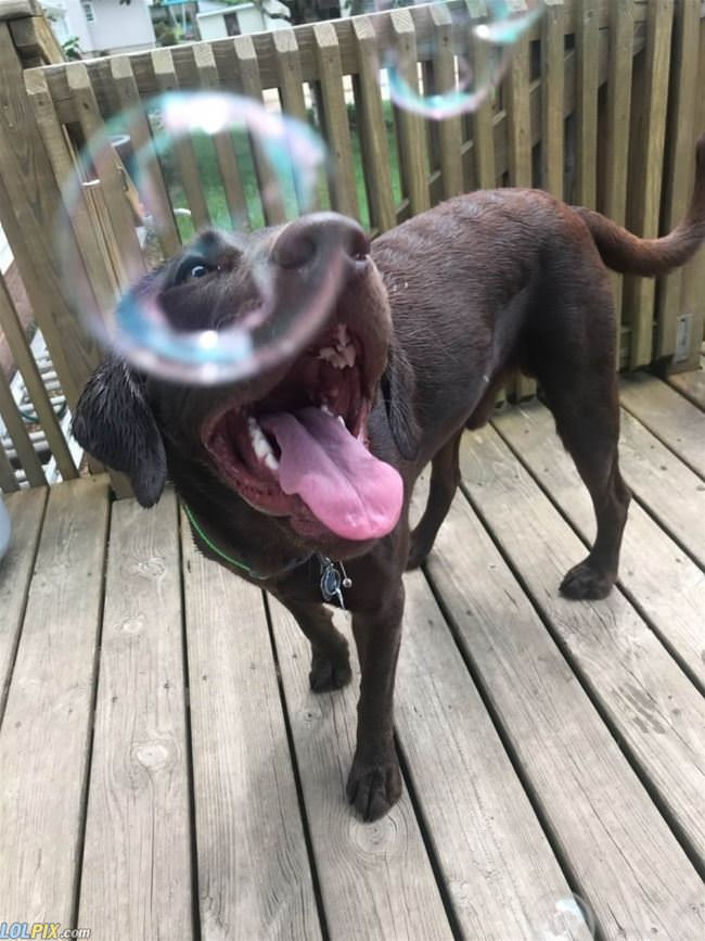 i like bubbles