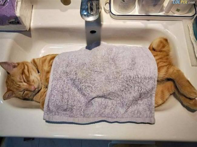 asleep in my sink