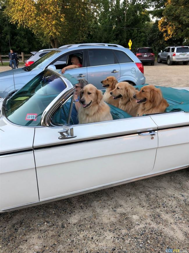 dogs on the road again