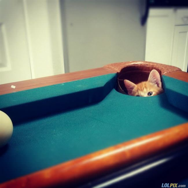 pool pocket kitten