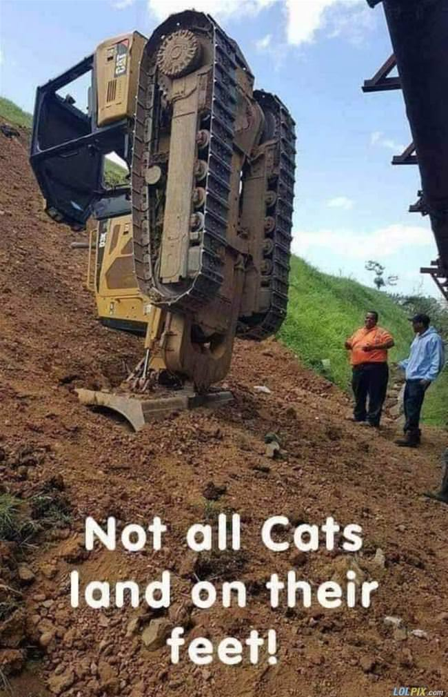 not all cats