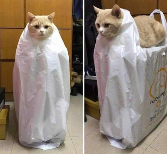 plastic bag cat