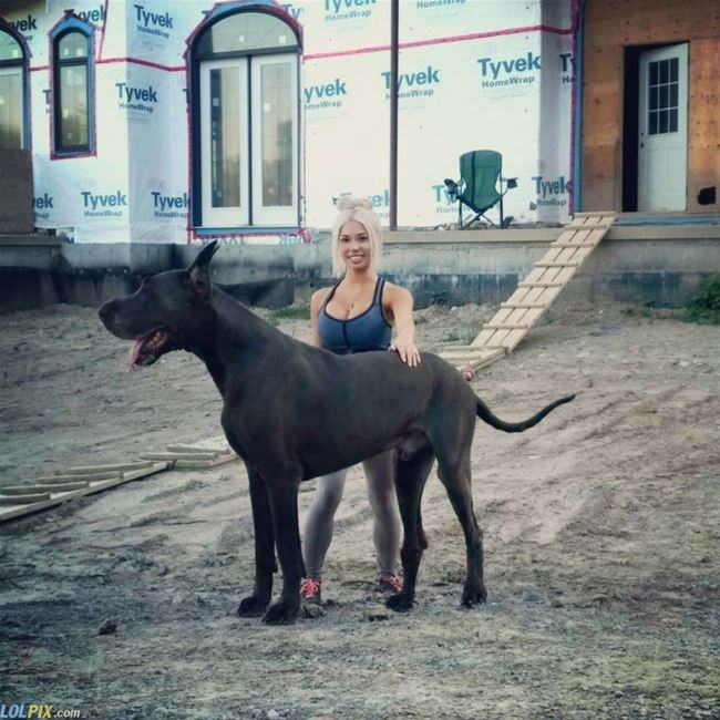 that is a huge dog