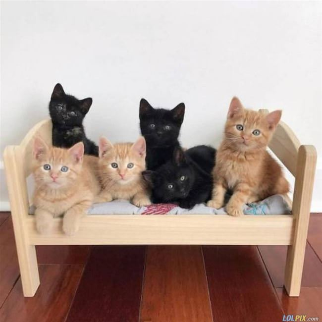 the kitten bed
