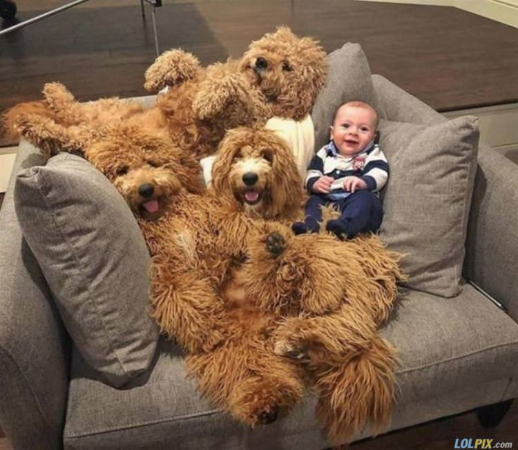 the dog couch