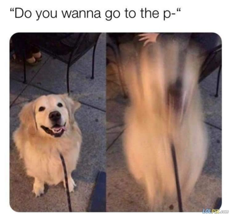 wanna go to the p