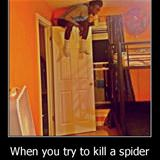 killing a spider