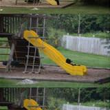 bears on the slide