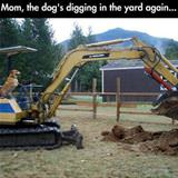 digging in the yard