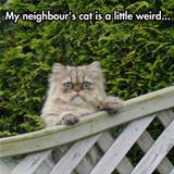 neighbors cat