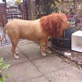 ordered a lion off ebay