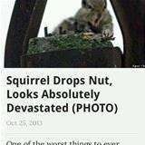 squirrel drops a nut