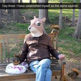 the alpha squirrel