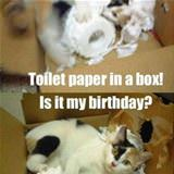 toilet paper and a box