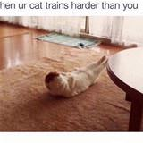 cat trains hard