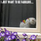just want to be fabulous