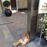 lazy doorman
