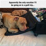 the only vacation