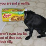 you are not a waffle