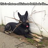 an addiction to fetch
