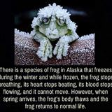 cool winter frog
