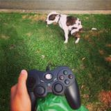 dog video game