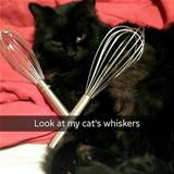 my cats whiskers