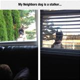 the neighbors dog
