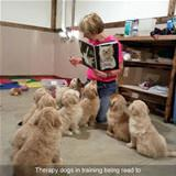 therapy dogs being trained